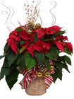 Decorated Poinsettia  from Boulevard Florist Wholesale Market
