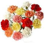 Carnation from Boulevard Florist Wholesale Market