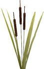Cattails from Boulevard Florist Wholesale Market