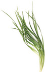 Lily Grass from Boulevard Florist Wholesale Market