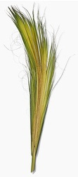 Palm Bud from Boulevard Florist Wholesale Market