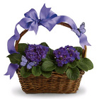 Violets and Butterflies from Boulevard Florist Wholesale Market