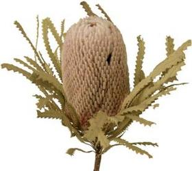 Banksia  from Boulevard Florist Wholesale Market