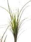 Bear Grass from Boulevard Florist Wholesale Market
