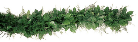 Garland Fresh Salal & Plumosa from Boulevard Florist Wholesale Market
