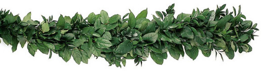 Garland Fresh Salal & Ruscus from Boulevard Florist Wholesale Market