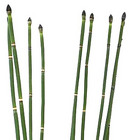 Horsetail from Boulevard Florist Wholesale Market