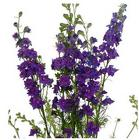Larkspur BU from Boulevard Florist Wholesale Market