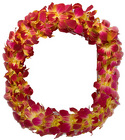 Lei - Dendrobium Orchid - Double Dyed Yellow from Boulevard Florist Wholesale Market