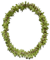 Lei - Dendrobium Orchid - Single Jade Green from Boulevard Florist Wholesale Market