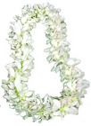 Lei - Dendrobium Orchid - Double White from Boulevard Florist Wholesale Market