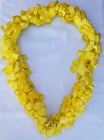 Lei - Dendrobium Orchid - Triple White Dyed Yellow from Boulevard Florist Wholesale Market