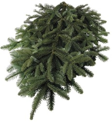 Noble Fir Boughs from Boulevard Florist Wholesale Market