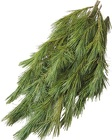 Princess Pine Pre-Packed Bunches from Boulevard Florist Wholesale Market