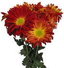 Rover Mum from Boulevard Florist Wholesale Market