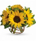 Sunny Sunflowers from Boulevard Florist Wholesale Market