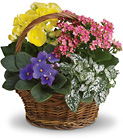 Spring Has Sprung Mixed Basket from Boulevard Florist Wholesale Market