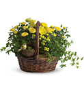 Yellow Trio Basket from Boulevard Florist Wholesale Market