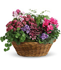 Simply Chic Mixed Plant Basket from Boulevard Florist Wholesale Market