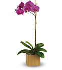Teleflora's Imperial Purple Orchid from Boulevard Florist Wholesale Market