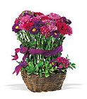 Basket of Smiles from Boulevard Florist Wholesale Market