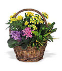 Petite European Basket from Boulevard Florist Wholesale Market