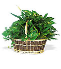 Large Basket Garden from Boulevard Florist Wholesale Market