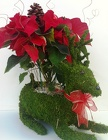 Live Poinsettia in Moss Reindeer Planter from Boulevard Florist Wholesale Market