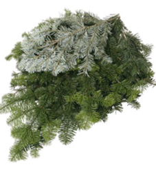 Silver Fir Tip Case from Boulevard Florist Wholesale Market